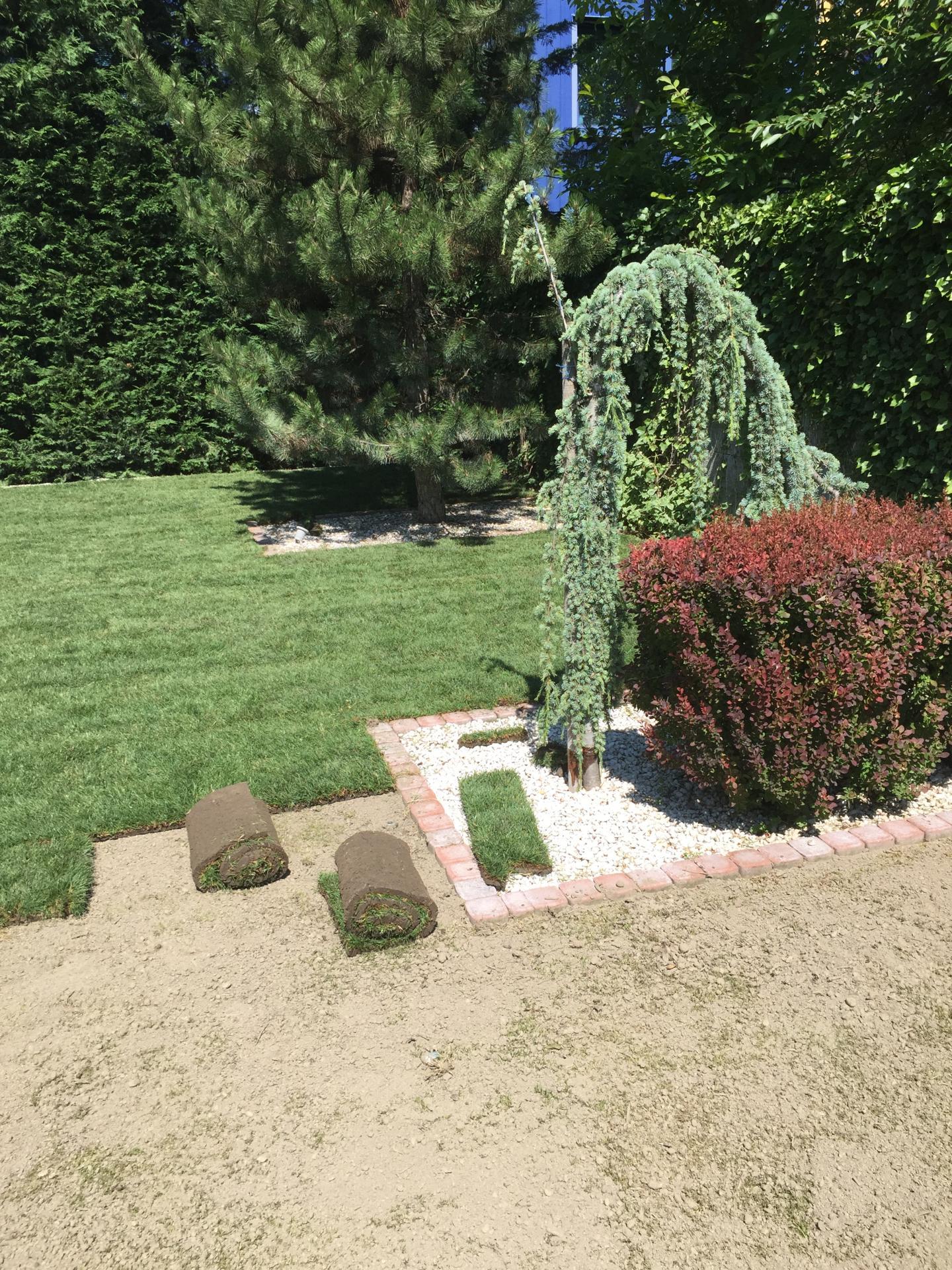 Realizácia záhrad - Prievoz - Stellagarden